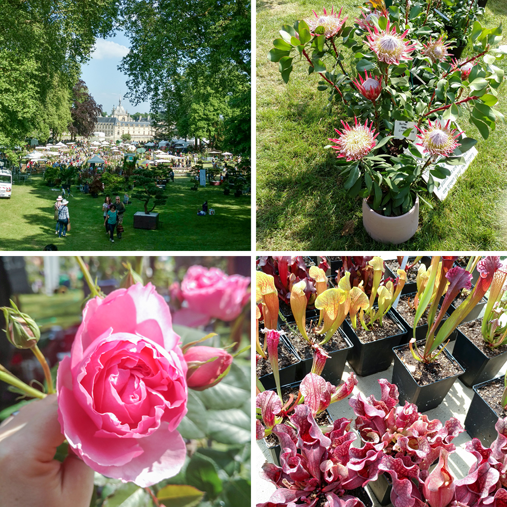JOELIX.com | Journées des Plantes in Chantilly 2018 #journeesdesplantes #chantilly #succulents