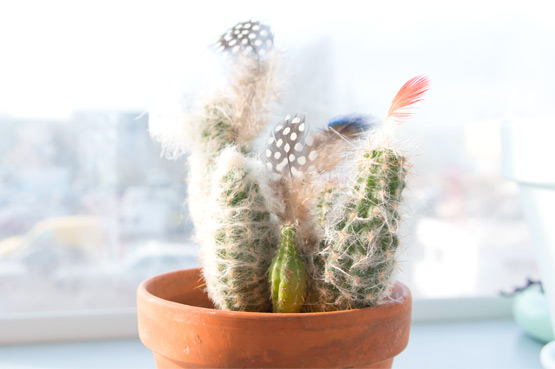 JOELIX.com | Cactus with polkadotted Guineafowl feathers