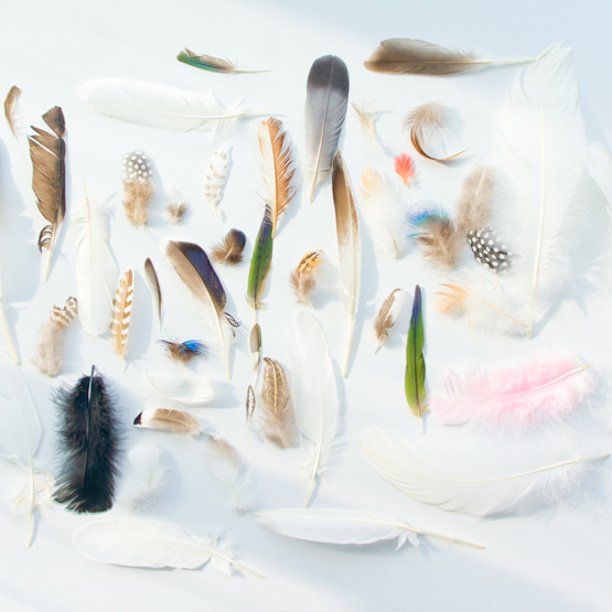 JOELIX.com | Feather collection