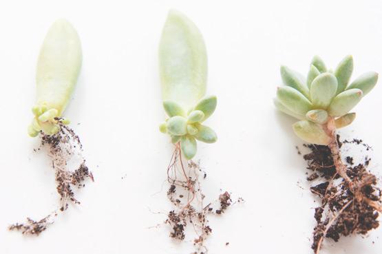 Grow Your Own Succulents Joelix