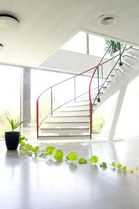 Suspended staircase and honeydew plant