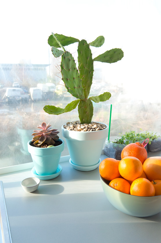 JOELIX.com | Cactus plant and oranges in our kitchen