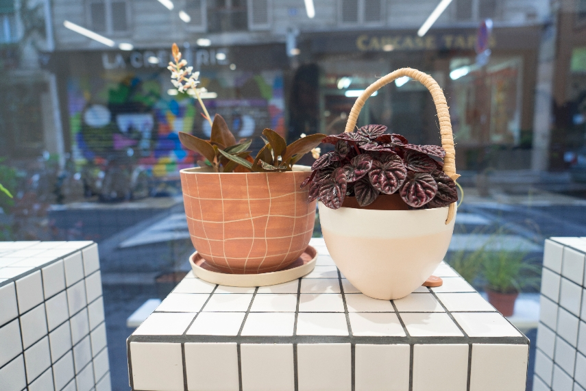 JOELIX.com | Leaf plant shop in Paris #urbanjunglebloggers #plantshop #paris