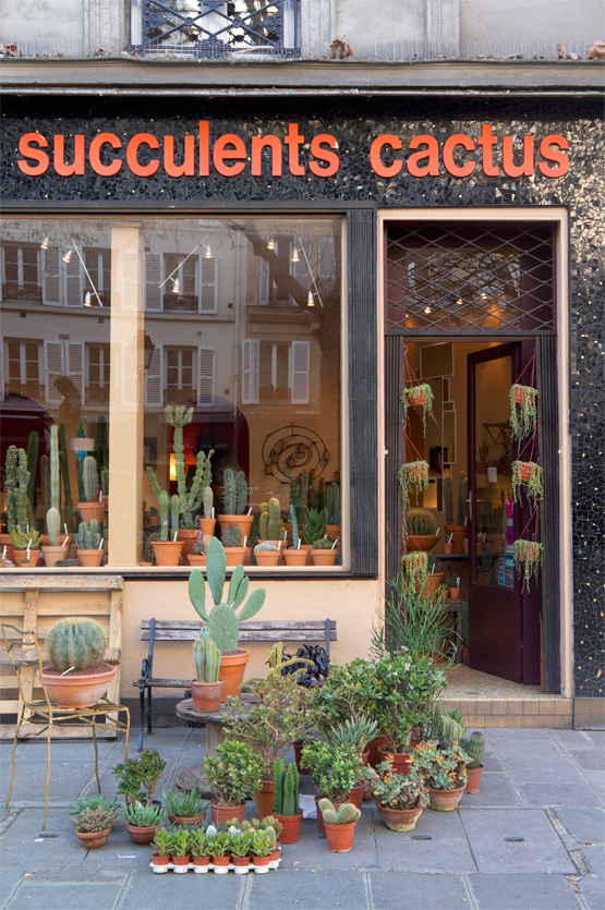 JOELIX.com | Les Succulents Cactus shop in Paris