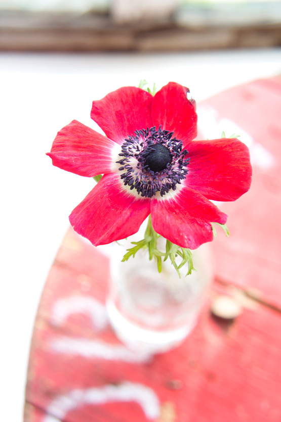 JOELIX.com | Red anemone flower #2flowergirls
