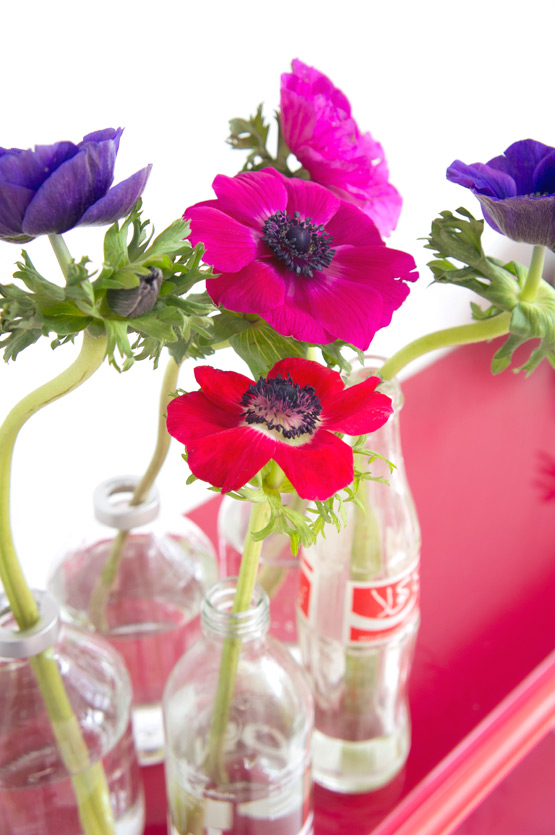 JOELIX.com | Colorful anemones in reused Coca Cola bottles #2flowergirls