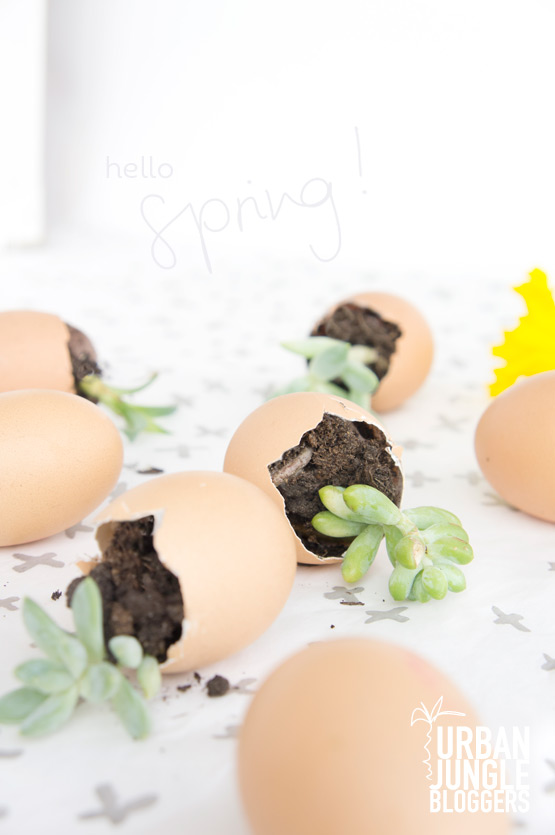 JOELIX.com | Urban Jungle Bloggers succulents in eggshells for easter