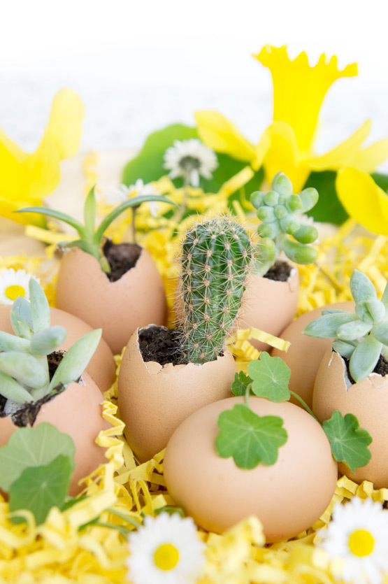 JOELIX.com | Urban Jungle Bloggers mini cactus in eggshell for easter