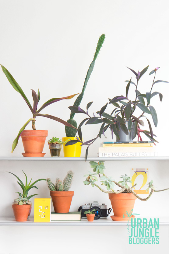 JOELIX.com | Urban Jungle Bloggers Plantshelfie