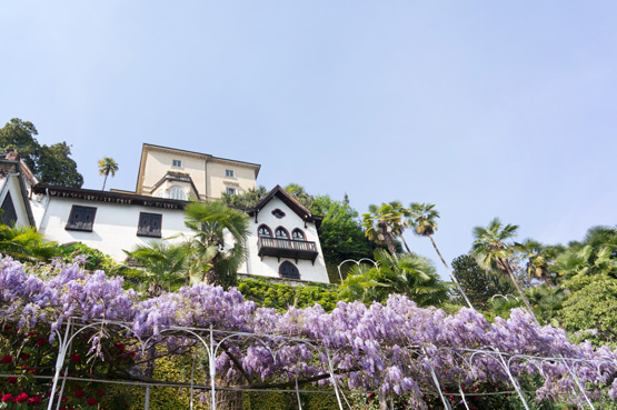 JOELIX.com | Purple wisteria in Italy