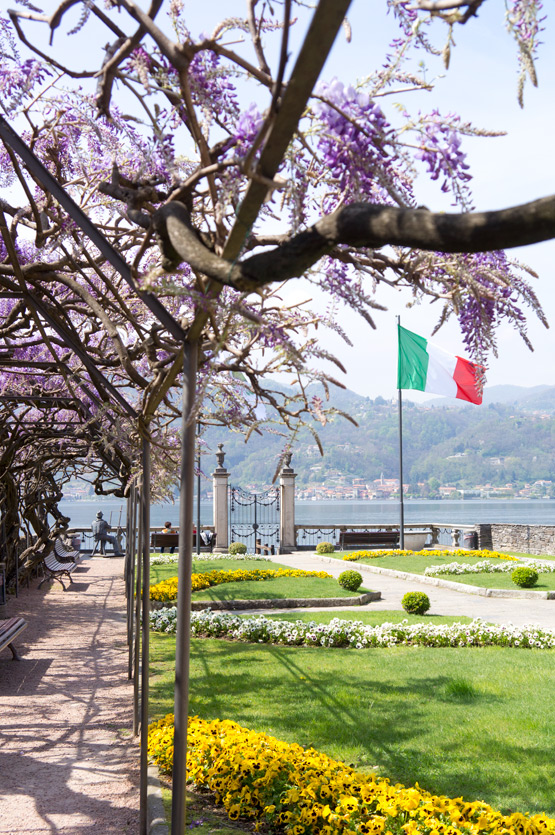 JOELIX.com | Purple wisteria and Italian flag