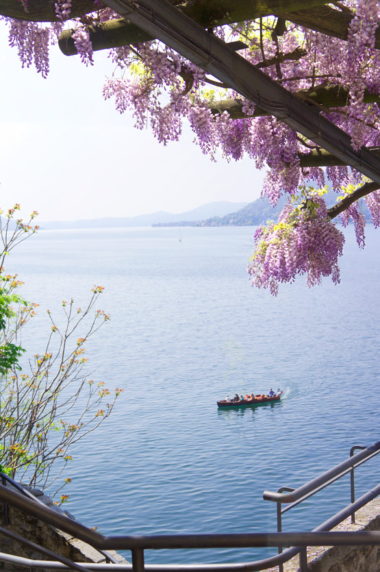 JOELIX.com | Purple wisteria at the Lago Maggiore in Italy