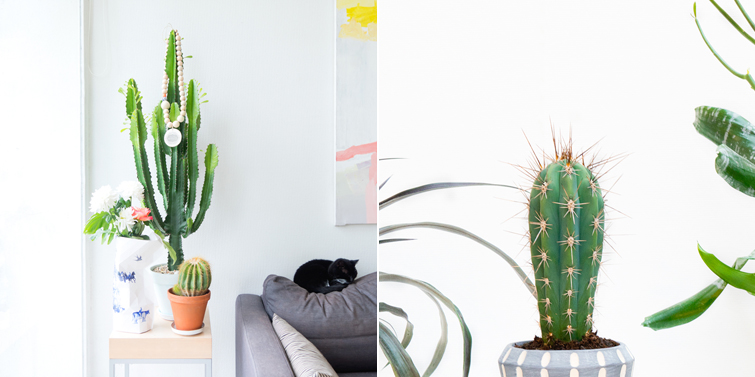 JOELIX.com | Urban Jungle Bloggers Botanical Zoom succulent versus cactus