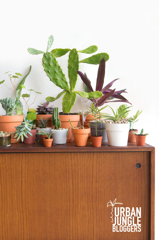 JOELIX.com | Urban Junge Bloggers 1 plant / 3 stylings #urbanjunglebloggers #urbanjungle #botanical #terracotta