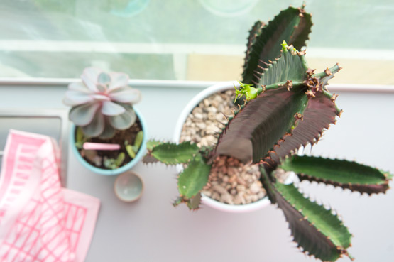 JOELIX.com | Urban Jungle Bloggers #euphorbia #cactus