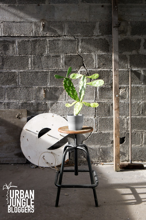 JOELIX.com | Urban Junge Bloggers 1 plant / 3 stylings #urbanjunglebloggers #urbanjungle #industrial