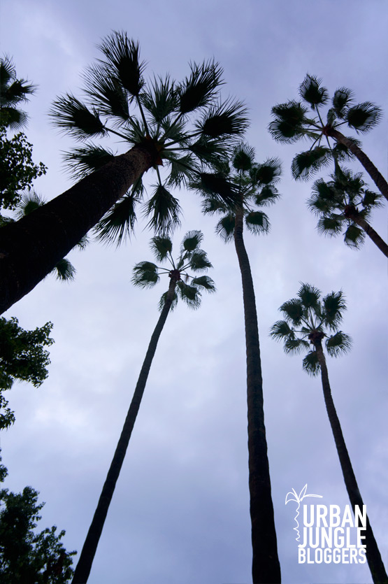JOELIX.com Urban Jungle Bloggers #palmtrees #howto