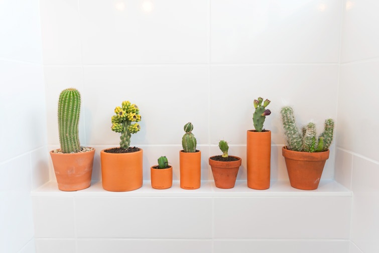 JOELIX.com | Urban Jungle Bloggers #plantshelfie