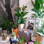 JOELIX.com | Houseplant Travel to South Africa